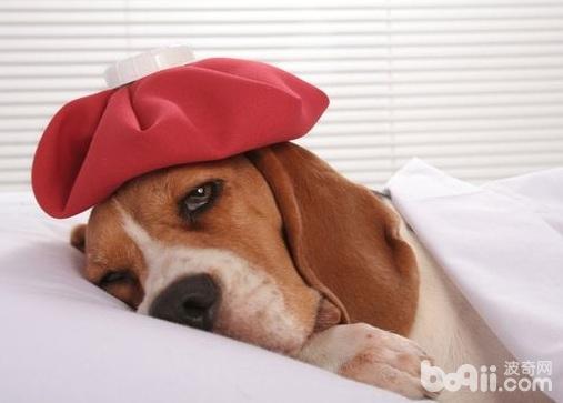 预防狗狗中暑的措施,狗狗预防中暑要注意什么-成犬饲养